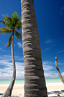 Coconut Palms at the Yacht Club on West Island, Cocos Keeling Islands, Indian Ocean