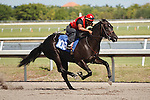 #106Fasig-Tipton Florida Sale,Under Tack Show. Palm Meadows Florida 03-23-2012 Arron Haggart/Eclipse Sportswire.