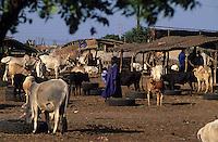 Afrique/Afrique de l'Ouest/Sénégal/Dakar : Le marché aux bestiaux