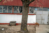 A dog guards industrial units at Keretem, the former ceramic factory was used as a concentration camp for Bosniaks and Croats during the war.