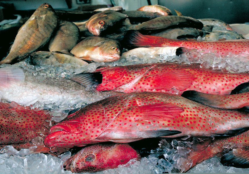 Fresh Red Snapper fish on ice in a Washington DC outdoor fish market.