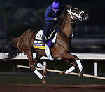 ARCADIA, CA - NOV 01: Curalina, owned by Eclipse Thoroughbred Partners and trained by Todd A. Pletcher, exercises in preparation for the Breeders' Cup Longines Distaff at Santa Anita Park on November 1, 2016 in Arcadia, California. (Photo by Scott Serio/Eclipse Sportswire/Breeders Cup)