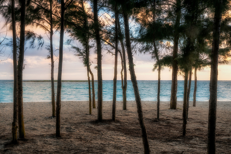 Sunrise through Ironwood trees at Kailua Beach Park, Oahu, Hawaii