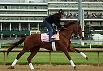 LOUISVILLE, KY - MAY 04:  Land Over Sea (Bellamy Road x Belle Watling, by Pulpit) gallops at Churchill Downs (Louisville KY) with exercise rider Jonny Garcia in preparation for the Kentucky Oaks. Owner Reddam Racing LLC, trainer Doug F. O'Neill. (Photo by Mary M. Meek/Eclipse Sportswire/Getty Images)