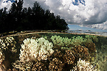 Shallow bleaching corals split level with the island