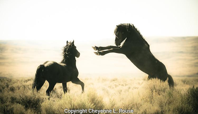 Wild horse play