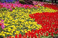 Yangzhou, Jiangsu, China.  Marigolds and Red Salvia (Scarlet Sage)  in the Slender West Lake Park Garden.