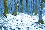 Europa, DEU, Deutschland, Baden-Wuerttemberg, Landkreis Reutlingen, Goenningen, Schwaebische Alb, Albtrauf, Wiesaztal, Typische Landschaft, Schnee, Natur, Umwelt, Landschaft, Jahreszeiten, Stimmungen, Landschaftsfotografie, Landschaften, Landschaftsphoto, Landschaftsphotographie, Wetter, Wetterelemente, Wetterlage, Wetterkunde, Witterung, Witterungsbedingungen, Wettererscheinungen, Meteorologie, Wettervorhersage, <br /> <br /> [Fuer die Nutzung gelten die jeweils gueltigen Allgemeinen Liefer-und Geschaeftsbedingungen. Nutzung nur gegen Verwendungsmeldung und Nachweis. Download der AGB unter http://www.image-box.com oder werden auf Anfrage zugesendet. Freigabe ist vorher erforderlich. Jede Nutzung des Fotos ist honorarpflichtig gemaess derzeit gueltiger MFM Liste - Kontakt, Uwe Schmid-Fotografie, Duisburg, Tel. (+49).2065.677997, ..archiv@image-box.com, www.image-box.com]