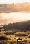 Moose bull, Grand Teton National Park, Wyoming