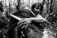 """Índio Werekena, morador da comunidade de Anamoim no alto rio Xié, prepara um pacote de piaçaba  chamada de      """" piraíba """"  (Leopoldínia píassaba Wall),após cortá-la.  A  árvore que normalmente aloja os mais variados tipos de insetos representando um grande risco aos índios durante sua coleta . A fibra  um dos principais produtos geradores de renda na região é  coletada de forma rudimentar. Até hoje é utilizada na fabricação de cordas para embarcações, chapéus, artesanato e principalmente vassouras, que são vendidas em várias regiões do país.<br />Alto rio Xié, fronteira do Brasil com a Colômbia a cerca de 1.000Km oeste de Manaus.<br />06/06/2002.<br />Foto: Paulo Santos/Interfoto Expedição Werekena do Xié<br /> <br /> Os índios Baré e Werekena (ou Warekena) vivem principalmente ao longo do Rio Xié e alto curso do Rio Negro, para onde grande parte deles migrou compulsoriamente em razão do contato com os não-índios, cuja história foi marcada pela violência e a exploração do trabalho extrativista. Oriundos da família lingüística aruak, hoje falam uma língua franca, o nheengatu, difundida pelos carmelitas no período colonial. Integram a área cultural conhecida como Noroeste Amazônico. (ISA)"""