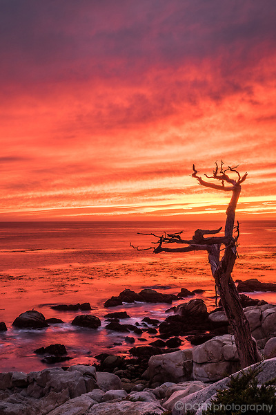 Red, orange, purple sunset over ocean with tree in the foreground