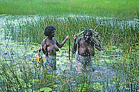 Traditional Australian Aboriginal women catching fresh water file snakes and turtles in a swamp.Top End Northern Territory, Australia