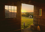 Horses- Stables and Farms