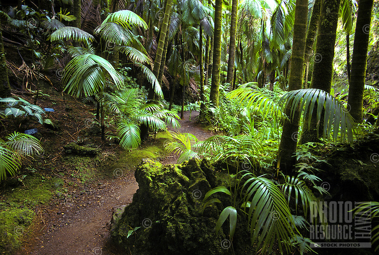 View of the trail through Hawaii Tropical Botanical Garden found on the big island