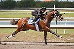 #155Fasig-Tipton Florida Sale,Under Tack Show. Palm Meadows Florida 03-23-2012 Arron Haggart/Eclipse Sportswire.