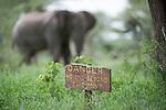 Male bull African elephant (Loxodonta africa) in front of Ndutu Safari Lodge with tourist warning sign. Ndutu, border of Ngorongoro Conservation Area and Serengeti, Tanzania.