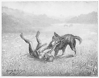 Feral child playing with a wolf cub  4 of 5 / Harry B Neilson Badminton magazine 1895 / 1895