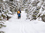 Cross Country Skiing through the forest at Rattlesnake recreation Area near Missoula, Montana