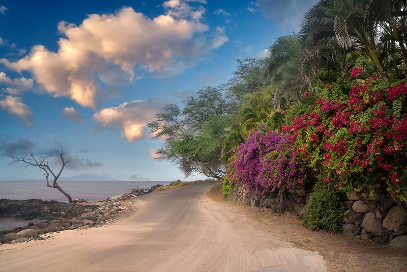 Road and bougainvillea flowers. Near Makena, Maui, Hawaii