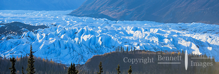 One of Alaska's most accessible glaciers, the Matanuska Glacier, located 100 miles northeast of Anchorage, glows at sunrise on a fall morning.