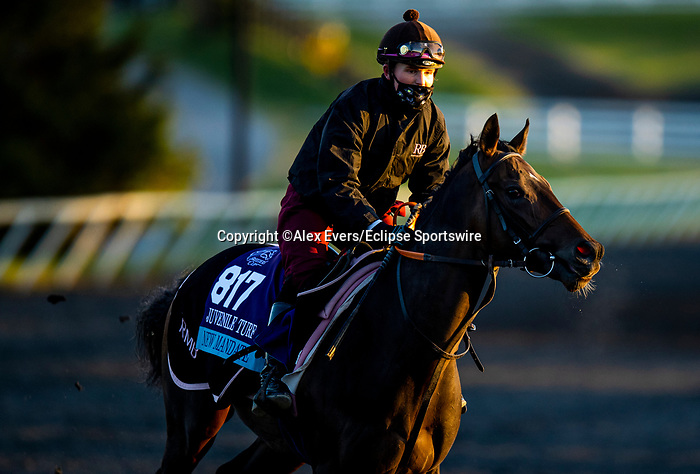 November 3, 2020: New Mandate and Devilwala, trained by trainer Ralph M. Beckett, exercises in preparation for the Breeders' Cup Juvenile Turf at Keeneland Racetrack in Lexington, Kentucky on November 3, 2020. Alex Evers/Eclipse Sportswire/Breeders Cup