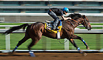 October 27, 2014:  Footbridge, trained by Eoin Harty, exercises in preparation for the Breeders' Cup Classic at Santa Anita Race Course in Arcadia, California on October 27, 2014. Scott Serio/ESW/CSM