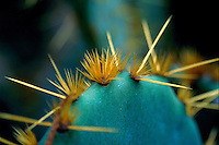 Close up detail of the side of a cactus. Texas.