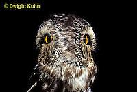 OW12-002z  Saw-whet owl - double exposure showing ability to turn head - Aegolius acadicus