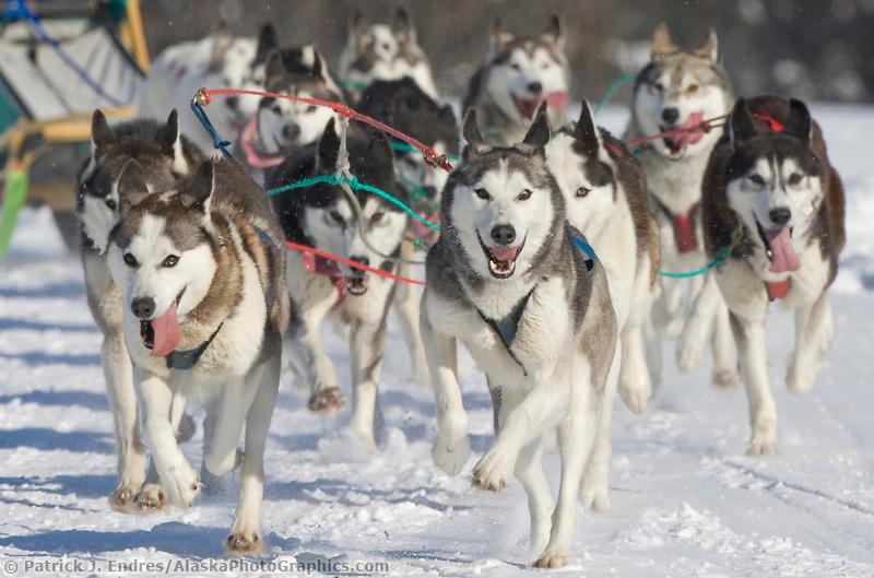 Musher J. P. Norris, 2007 Open North American Championship sled dog race (the world's premier sled dog sprint race) is held annually in Fairbanks, Alaska.