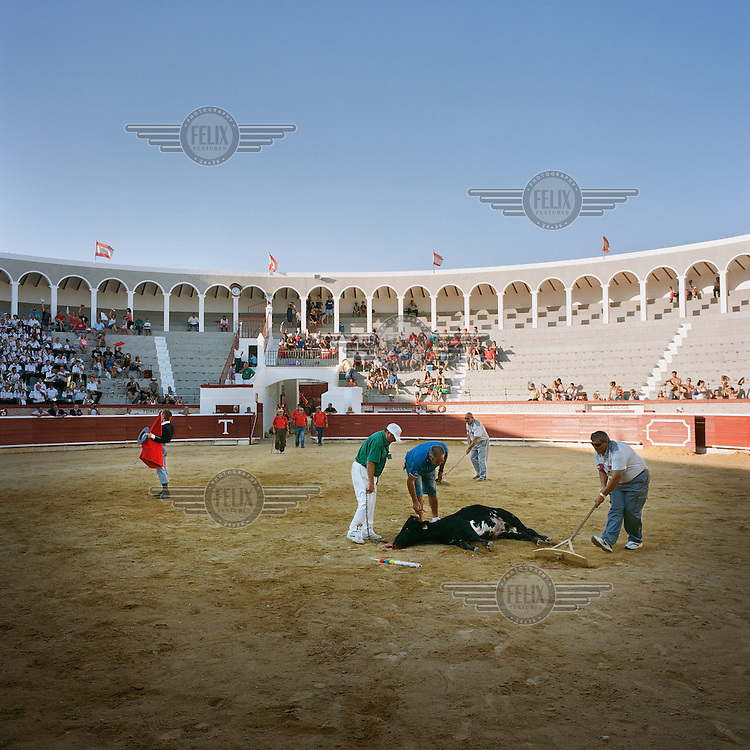 Bullring staff prepare to move a dead animal as the Matador takes the crowd's adulation during an afternoon's events at the town's bullring.