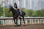 APR 24,2015:Smoking Sun,trained by Pasal Barry,prepares for the Audemars Piguet Queen Elizabeth 2nd Cup at Sha Tin in New Territories,Hong Kong. Kazushi Ishida/ESW/CSM