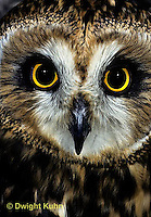 OW05-048z  Short-eared owl - close up of eyes - Asio flammeus