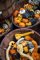 """Baskets of decorative gourds shout """"Autumn!"""" at a roadside stand along a northern Utah two lane."""