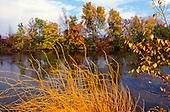 Niskayuna NY. Trees and dried plants in fall at stream near Mohawk River on River Road (near Route 7). ID: BO-FC. © Ellen B. Senisi