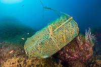 Fish Trap in Reef, Cap de Creus, Costa Brava, Spain, Mediterranean Sea, Atlantic