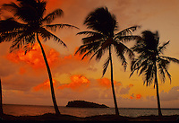 Palm trees and sunset over Buck Island, U.S. Virgin Islands