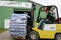 GERMANY, Lampertheim, garlic farming / DEUTSCHLAND, Lampertheim bei Worms, Pantiru Knoblauchkulturen GbR und Saatguthandel, Anlieferung von virenfreiem Saatgut aus Frankreich