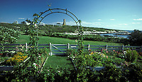 Celia Thaxter's recreated garden on Appledore Island, Isles of Shoals. Campus of the Shoals Marine Lab in the background. Photograph by Peter E. Randall.