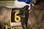 HALLANDALE FL - FEBRUARY 27: Mohaymen #6, in the post parade for the Xpressbet.com Fountain of Youth Stakes at Gulfstream Park on February 27, 2016 in Hallandale, Florida.(Photo by Alex Evers/Eclipse Sportswire/Getty Images)