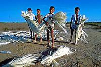 Crianças trabalhando em colheita de sisal. Rio Grande do Norte. 1978. Foto de Juca Martins..