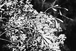 Image Ref: CA962<br /> Location: Bushrangers Bay Track<br /> Date of Shot: 28.09.19