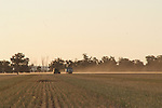 Canola Harvest, Riverina District 2011