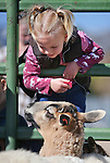 Gracie Shane, 2, checks out the animals at the annual Farm Days event at Fuji Park in Carson City, Nev., on Thursday, April 17, 2014.<br /> Photo by Cathleen Allison