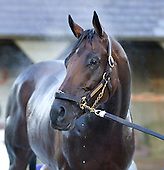 Blame wins his toughest race of 2010: Horse of the Year