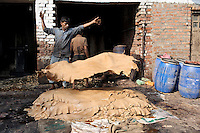 A tannery worker throws treated leather hides into a pile after coming out of a dyeing container. Workers often labor with little to no protection, even though the water used to treat the hides contains dangerous toxins and chemicals. The waste water runs into local sewers, which enter the nearby Ganges River.