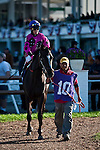 at the Tampa Bay Downs in Tampa, FL. on February 13, 2010.