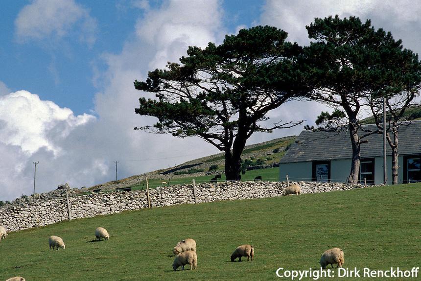 Großbritannien, Wales, Schafweide in Barmouth