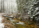Idaho, North, St. Joe National Forest, Osburn. Big Creek and a fallen footbridge with the first snow of late autumn.