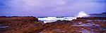 Avoca Beach, NSW