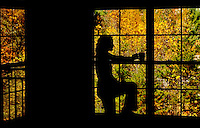 Silhouette of a woman drinking from a coffee cup with a canopy of autumn leaves outside a window behind her. Photo taken in Asheville NC's Biltmore Park Town Square, a planned community of residential living, office spaces and shopping.